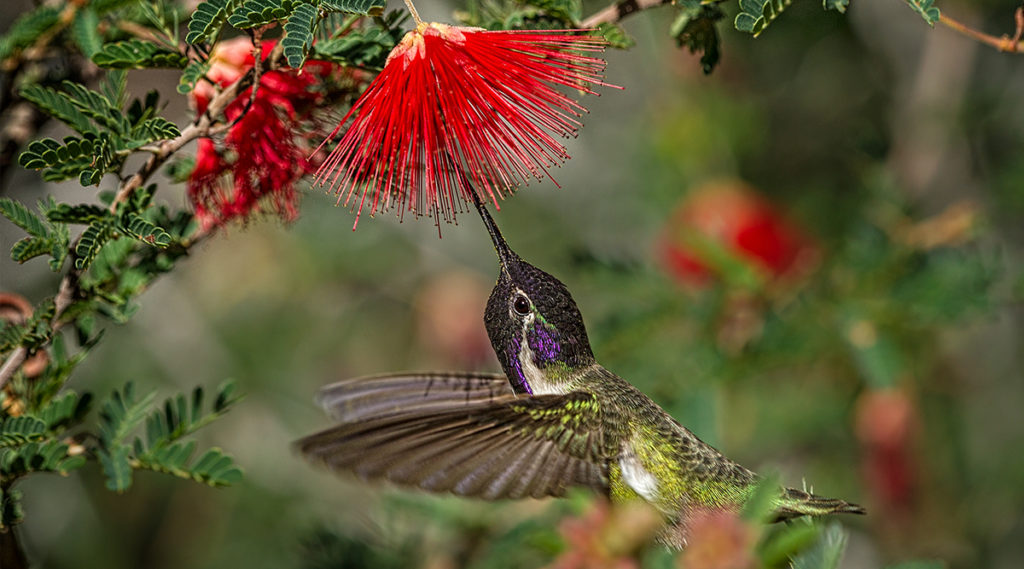 High definition professional quality photo of a hummingbird